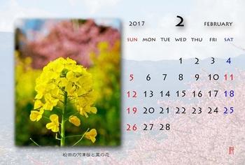 '17,2、月カレンダー(河津桜).jpg