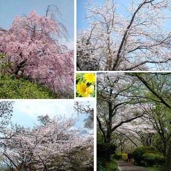 吾妻山公園1.jpg