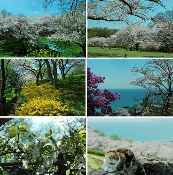吾妻山公園2.jpg