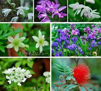 庭の花(オルレア シラン他).jpg