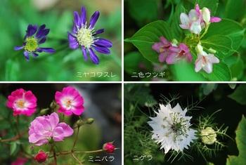 庭の花(ミヤコワスレ 二色ウツギ他).jpg