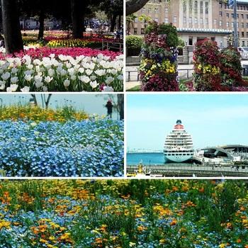 横浜緑化フェア.jpg