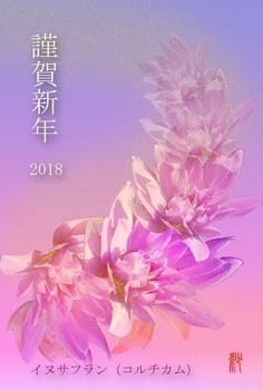 '18年年賀状(イヌサフラン).jpg