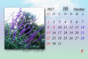 2017年10月カレンダー(サルビアレウカンサ).jpg