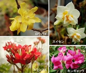今咲いている花(ロウバイ他).jpg