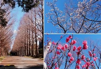 平塚総合公園.jpg