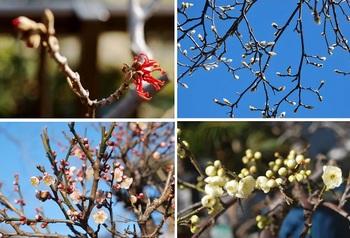 庭の花の木.jpg