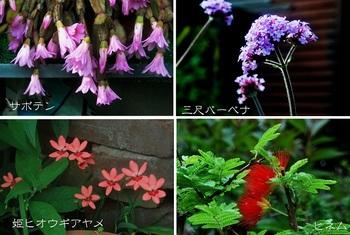 庭の花サボテン他.jpg