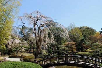 日本庭園枝垂れ.jpg