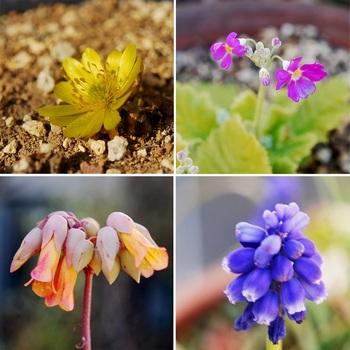 春の花4種.jpg