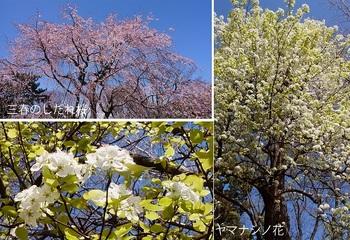 総合公園の花.jpg