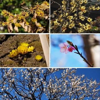 長谷寺の花.jpg