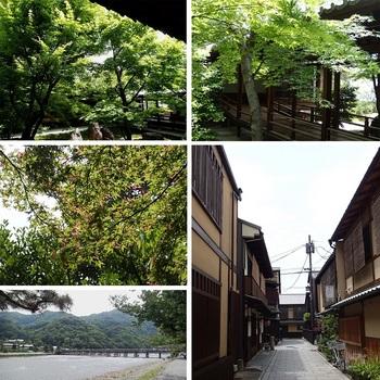 青モミジ 祇園 渡月橋.jpg